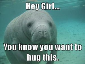 Hey-Girl-Manatee
